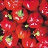 Pepper Sheepnose 10 Seeds + GIFT Only-Heirlooms