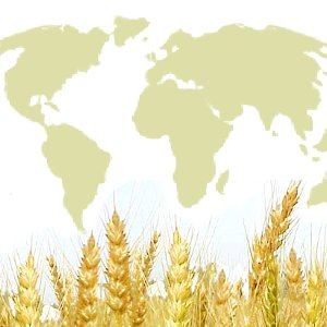 Food Shortage The Coming Global Food Shortage