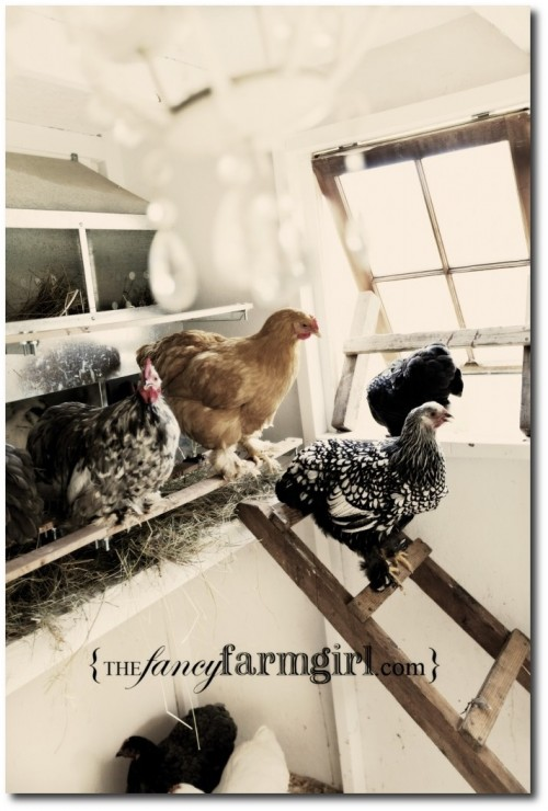 Chicken Coops4 500x740 The Cluckin' Basics: Keeping Chickens for the Next Catastrophe