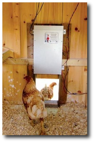 Chicken Coops5 The Cluckin' Basics: Keeping Chickens for the Next Catastrophe